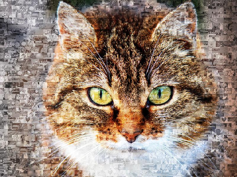 Mosaique photos chat