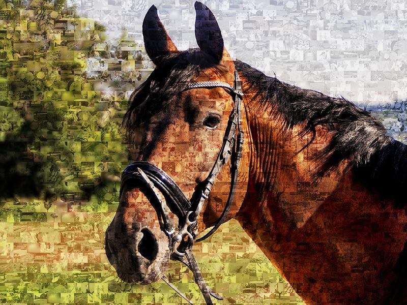 Mosaique photo cheval