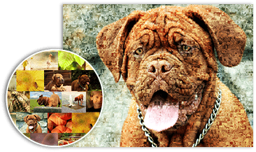 mosaique photo chien et chat details