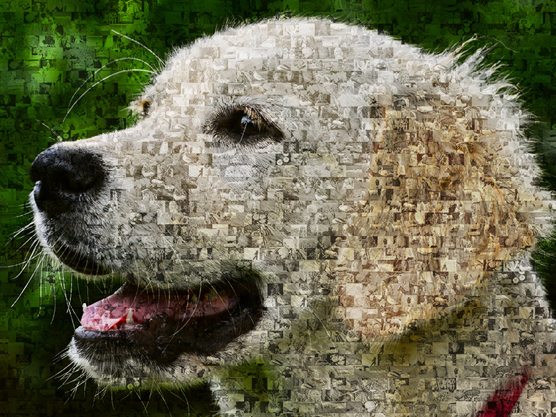 Mosaique photo golden retriever