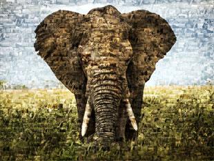 Éléphant en photo mosaique
